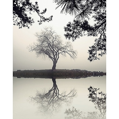 Printfinders Winter Willow by Nicholas Bell Photographic Print on Canvas; 14'' x 11''