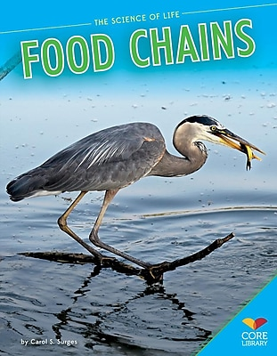 Food Chains 1300776