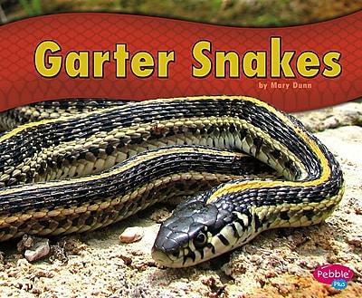 Garter Snakes 1302357