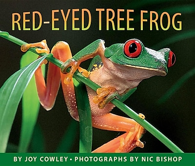 Red-Eyed Tree Frog 1307547