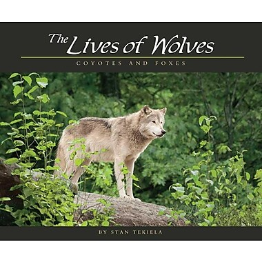 The Lives of Wolves: Coyotes and Foxes