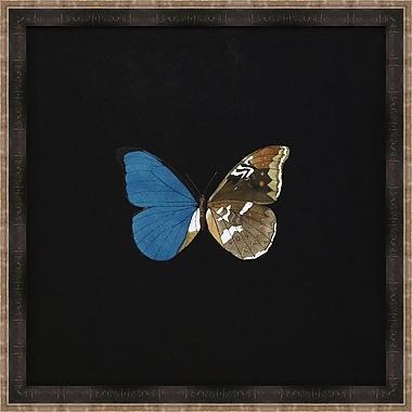 Melissa Van Hise Butterflies V Framed Graphic Art