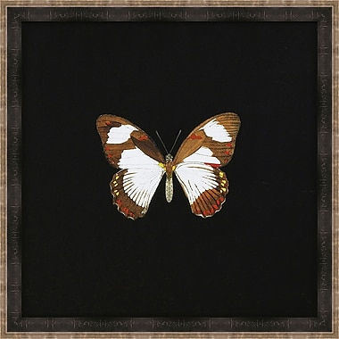 Melissa Van Hise Butterflies I Framed Graphic Art
