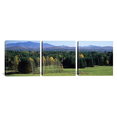 iCanvas Trees Photographic Print on Canvas; 12'' H x 36'' W x .75'' D