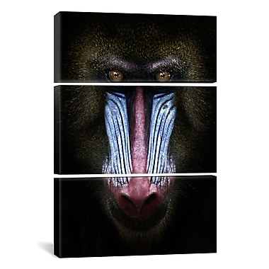 iCanvas SD Smart Mandrill 3 Piece Photographic Print on Wrapped Canvas; 90'' H x 60'' W x 1.5'' D