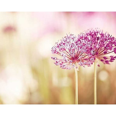 Printfinders Bloom by Carolyn Cochrane Photographic Print on Wrapped Canvas; 24'' H x 30'' W x 1'' D