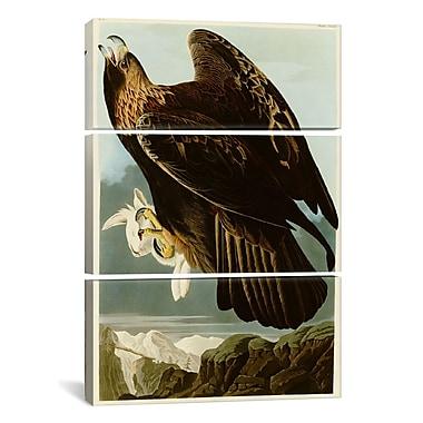 iCanvas Golden Eagle by John James Audubon 3 Piece Painting Print on Wrapped Canvas Set