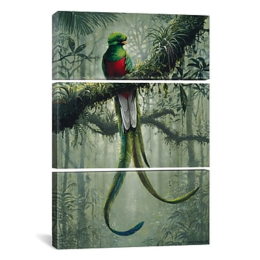iCanvas Harro Maass Resplendent Quetzal 3 Piece Graphic Art on Wrapped Canvas Set