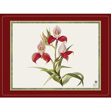 Pimpernel Botanical Orchid Placement Set Of 4 Staples