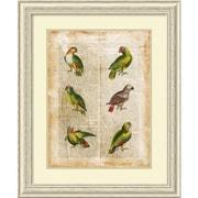 Amanti Art Antiquarian Parrots II Framed Art Print, 34.38H x 28.38W