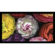 Amanti Art Assorted Ranuncula Framed Art Print by Pip Bloomfield, 26.5H x 46W