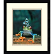 "Amanti Art ""Frogs"" Framed Art Print, 15.13""H x 13.13""W"