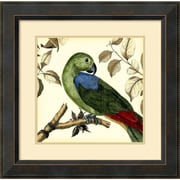"Amanti Art ""Tropical Parrot III"" Framed Art Print by Martinet, 23.38""H x 23.38""W"