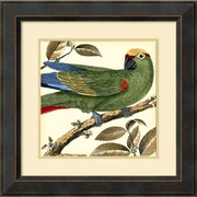 "Amanti Art ""Tropical Parrot I"" Framed Art Print by Martinet, 23.38""H x 23.38""W"
