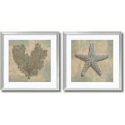 Amanti Art Aqua Fan Coral & Starfish - Set of 2 Framed Art Print by Caroline Kelly, 26.88H x 26.88W