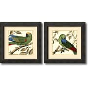 "Amanti Art ""Tropical Parrot - Set of 2"" Framed Art Print by Martinet, 23.38""H x 23.38""W"