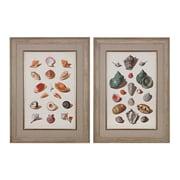 Sterling Industries Muller Shells V, VI - Set of 2 Framed Wall Art, 33H x 25W