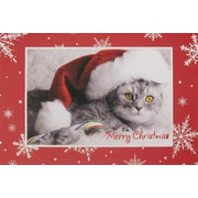 Cartes de Noël, chat avec chapeau de Noël, paq./12