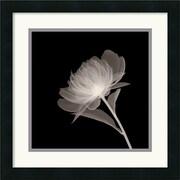 Amanti Art Full Bloom Framed Photographic Print