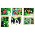 Mojo Education Growing Up Green Healthy Eating Puzzle, Fruit