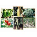 Mojo Education Growing Up Green Healthy Eating Puzzle, Vegetables