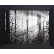 Artistic Reflections Light through the Trees II Framed Photographic Print