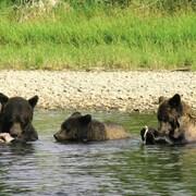 Bear Watching Experience, Hagensborg, BC