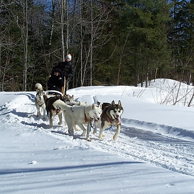 Dogsledding & Snowmobiling for 1 Experience, St-Jean-d'Orleans, QC