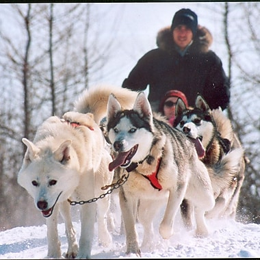Dogsledding for 2 Experience, St-Jean-d'Orleans, QC