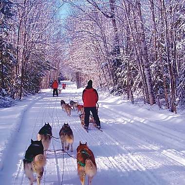 DogSledding Experience, Haliburton, ON