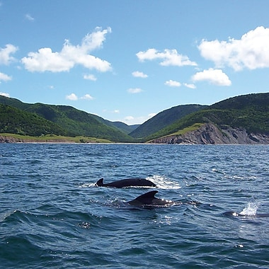 Zodiac Whalewatching & Cruise Experience, Dingwall, NS