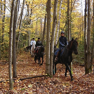 Horseback Riding Learning Experience, Notre-Dame-de-la-Salette, QC