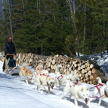 Dogsledding & Snowmobiling for 2 Experience, St-Jean-d'Orleans, QC