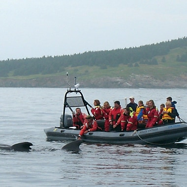 Whalewatching Experience, Pleasant Bay, NS