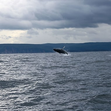 Zodiac Whalewatching Experience, Dingwall, NS