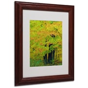"Trademark Kathie McCurdy ""Forest Beauty"" Art, White Matte With Wood Frame, 11"" x 14"""