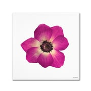 Trademark Kathie McCurdy Hot Pink Flower Gallery-Wrapped Canvas Art, 24 x 24