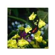 "Trademark Kurt Shaffer ""Doris Longwing Butterfly on Orchid"" Gallery-Wrapped Canvas Art, 14"" x 14"""