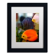 "Trademark Kurt Shaffer ""Multi-colored Discus"" Art, White Matte With Black Frame, 11"" x 14"""