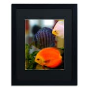 "Trademark Kurt Shaffer ""Multi-colored Discus"" Art, Black Matte With Black Frame, 16"" x 20"""