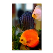 "Trademark Kurt Shaffer ""Multi-colored Discus"" Gallery-Wrapped Canvas Art, 12"" x 19"""