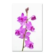 "Trademark Kurt Shaffer ""Purple Orchids"" Gallery-Wrapped Canvas Art, 22"" x 32"""