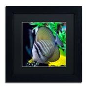 Trademark Kurt Shaffer Tropical Fish 2 Art, Black Matte With Black Frame, 11 x 11