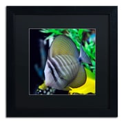 Trademark Kurt Shaffer Tropical Fish 2 Art, Black Matte With Black Frame, 16 x 16