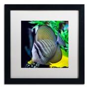 Trademark Kurt Shaffer Tropical Fish 2 Art, White Matte With Black Frame, 16 x 16