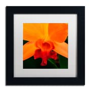 "Trademark Kurt Shaffer ""Brilliant Orchid on Fire"" Art, White Matte With Black Frame, 11"" x 11"""