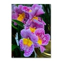 Trademark Kurt Shaffer in.Happy Orchidsin. Gallery-Wrapped Canvas Arts