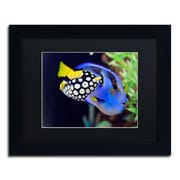 "Trademark Kurt Shaffer ""Colorful Tropical Fish"" Art, Black Matte With Black Frame, 11"" x 14"""
