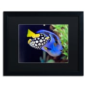 "Trademark Kurt Shaffer ""Colorful Tropical Fish"" Art, Black Matte With Black Frame, 16"" x 20"""