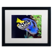 "Trademark Kurt Shaffer ""Colorful Tropical Fish"" Art, White Matte With Black Frame, 16"" x 20"""